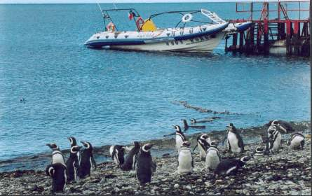 Trip to Magdalena Island in Straits of Magallean Pinguins, Dolphins watch Patagonia Adventure Eco Tourism