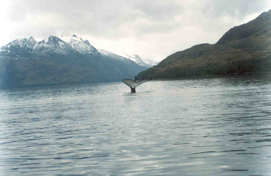 Travel to Whale shelter in Carlos III island Whale Watch Patagonia Adventure Tourism